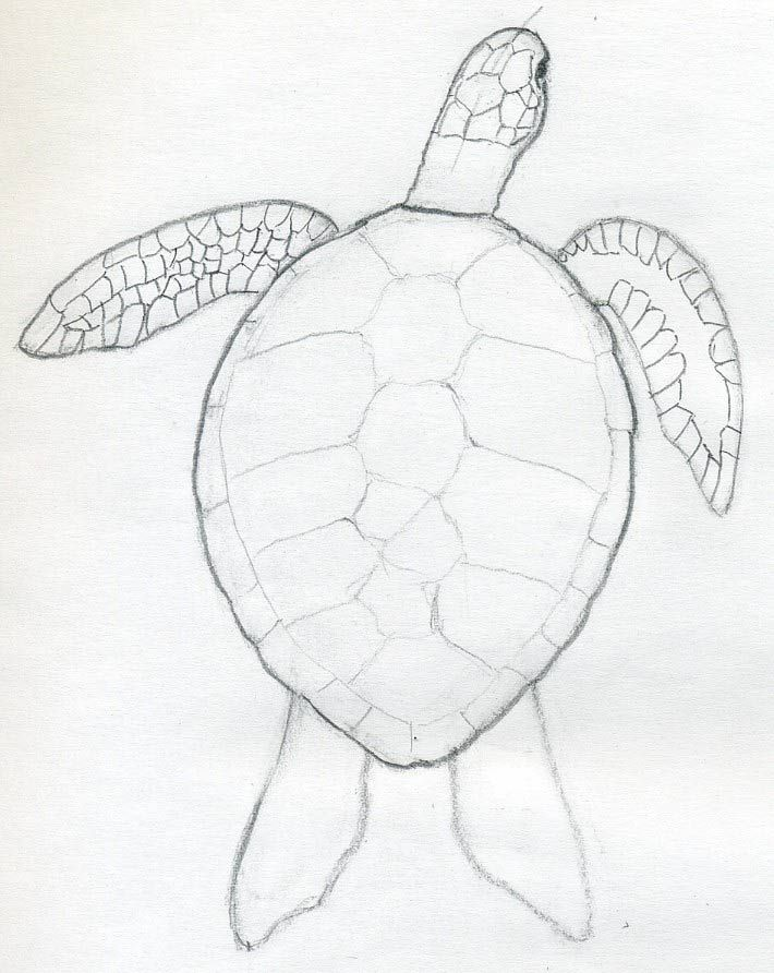 710x892 You'D Certainly Want To Know How To Draw A Turtle If You'D