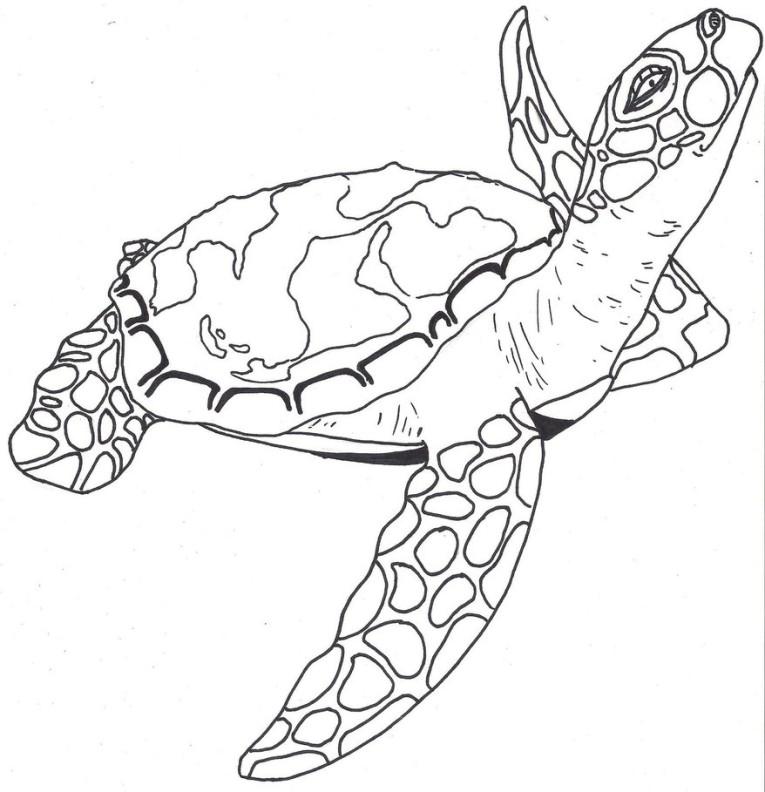 765x792 Cute Sea Turtle Drawing Tumblr Gallery Loggerhead Turtle Coloring