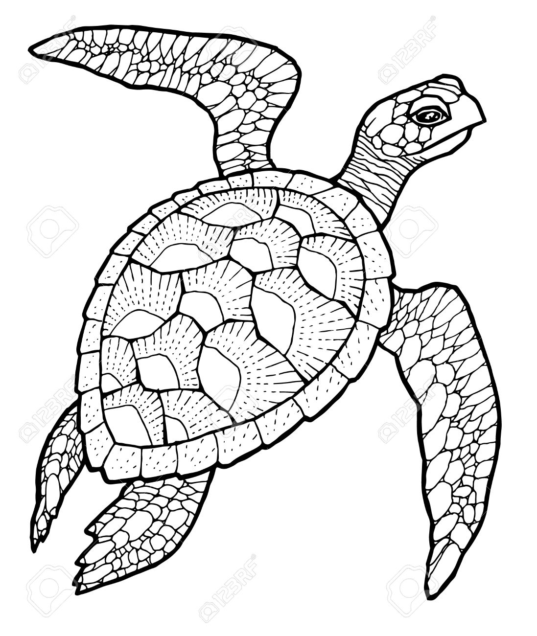 1097x1300 51356895 Sea Turtle Line Art Vector Stylized Drawing Stock Vector