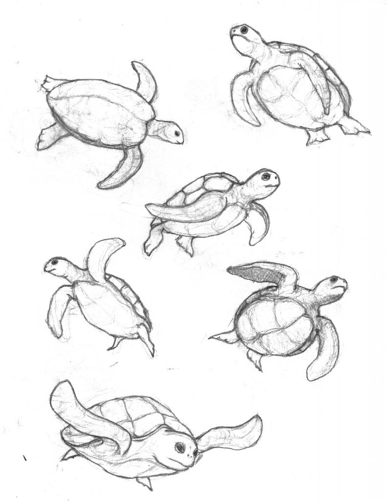 791x1024 Drawings Of Sea Turtles