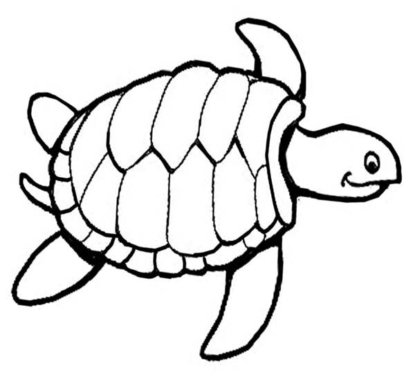 600x539 Drawn Sea Turtle Pattern