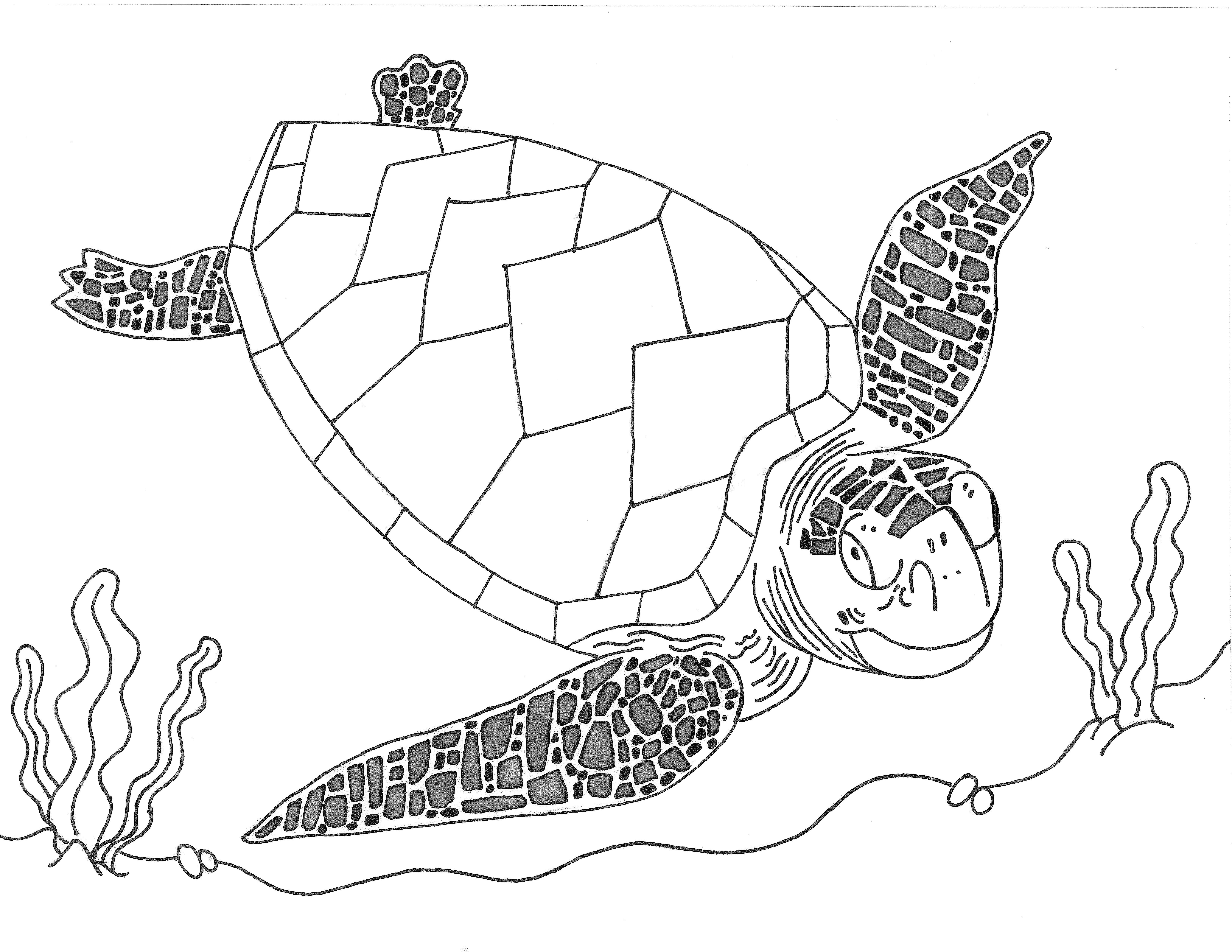Line Drawing Sea Turtle : Sea turtle line drawing at getdrawings free for