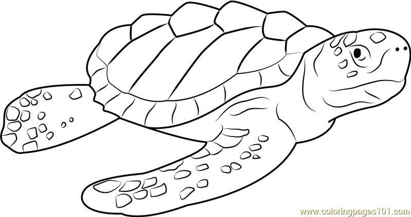 800x423 Logger Head Sea Turtle Coloring Page