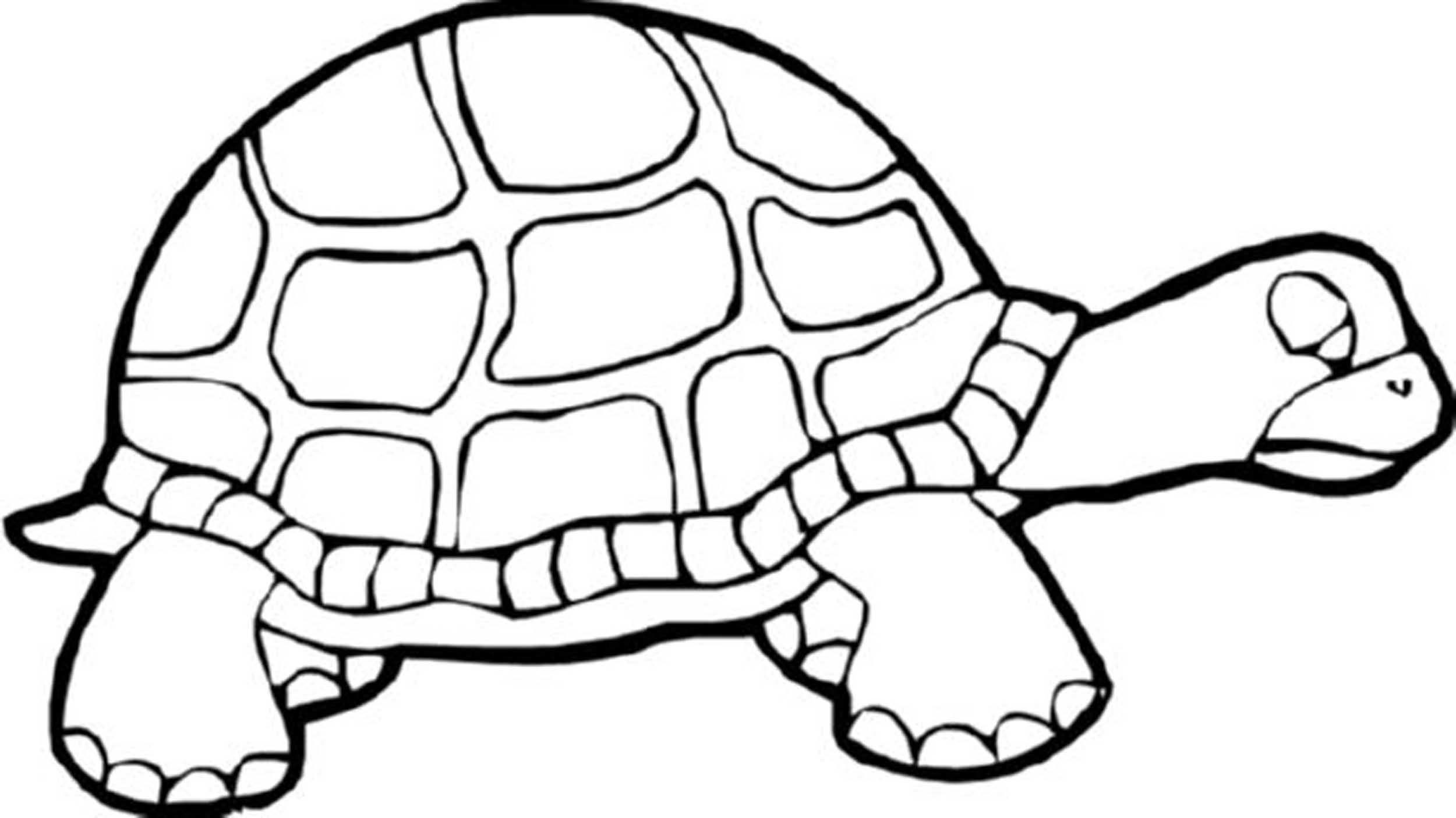 Sea Turtle Line Drawing at GetDrawingscom Free for personal use