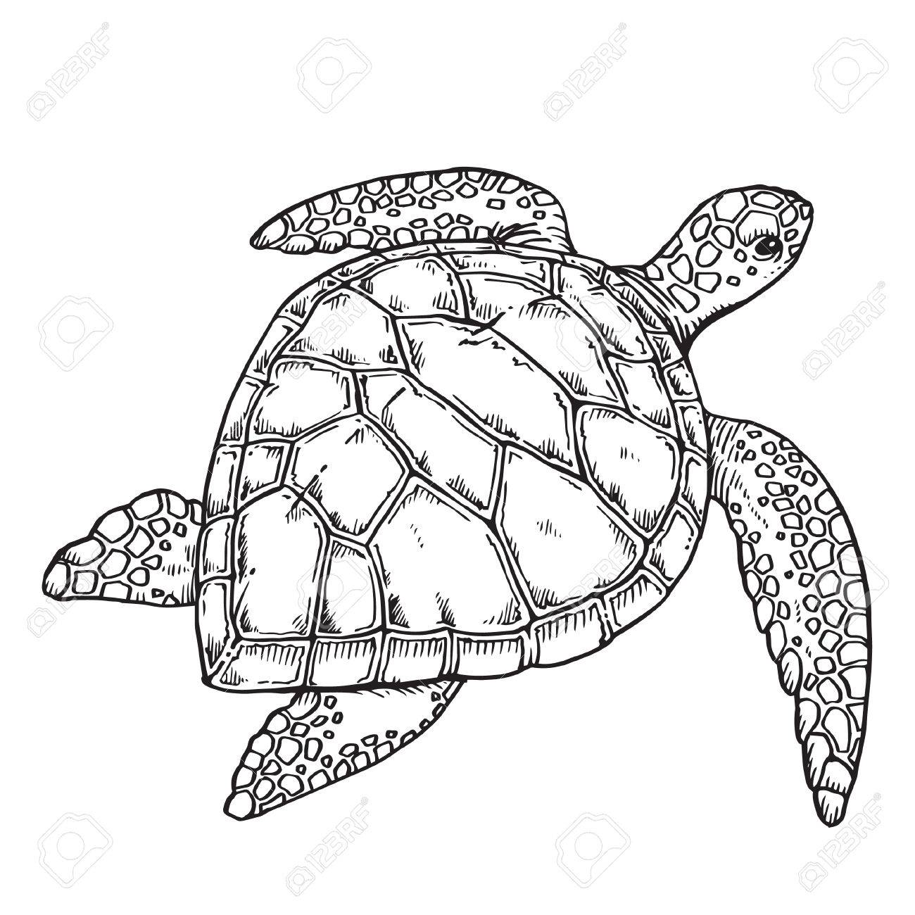 1300x1300 8,530 Sea Turtle Stock Vector Illustration And Royalty Free Sea