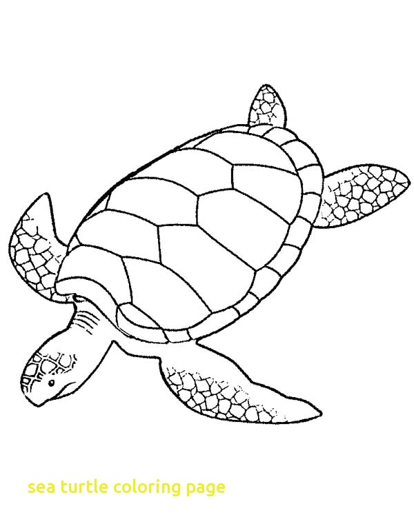 600x763 Sea Turtle Coloring Page With Drawn Sea Turtle Turtle Swimming