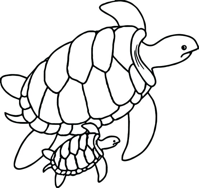 700x661 Sea Turtles Coloring Pages Imposing Ideas Sea Turtle Coloring