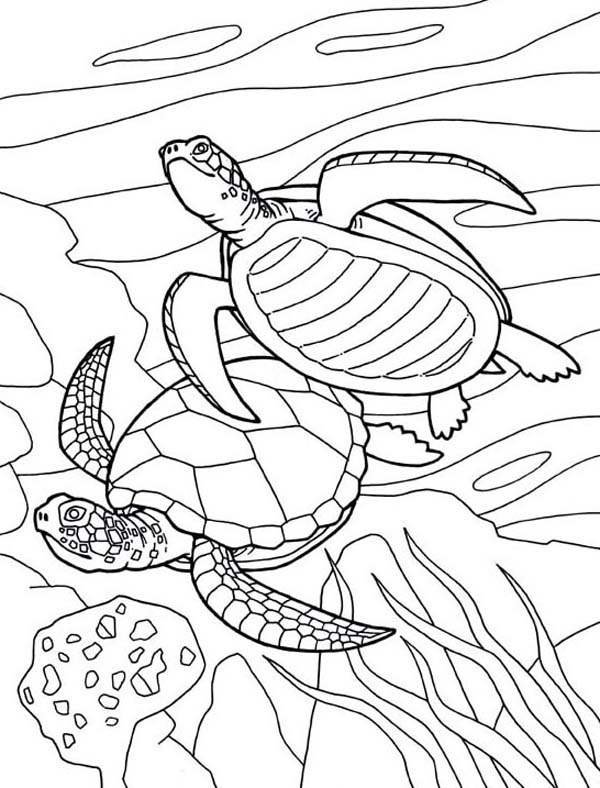 sea turtles drawing at getdrawings com free for personal use sea