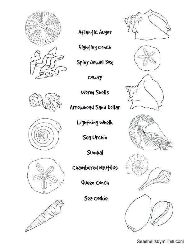 618x800 Shells Free Printable Seashell Coloring Pages Sheets Seashell