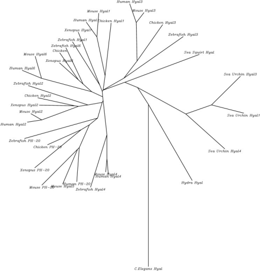 512x534 Unrooted Phylogenetic Tree With Branch Lengths For 34 H Open I