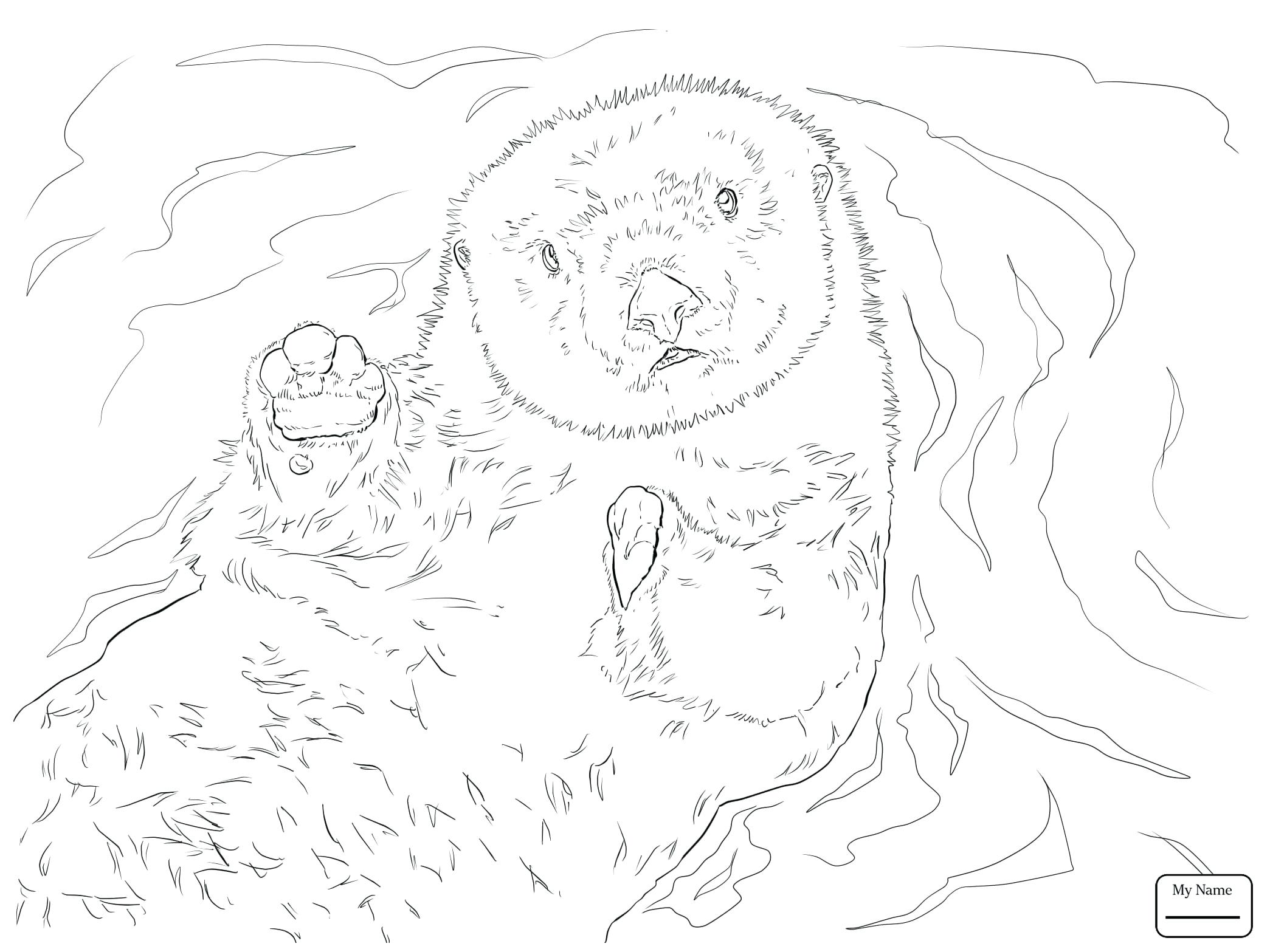 2089x1567 Coloring Sea Urchin Coloring Page