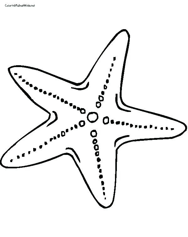 600x756 Sea Urchin Coloring Page