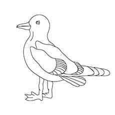 Seagull Cartoon Drawing