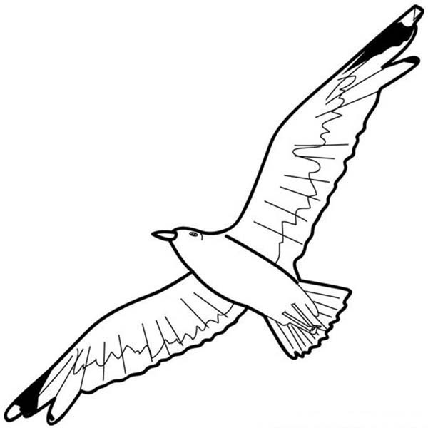 600x600 Seagull Floating In The Sky Coloring Page