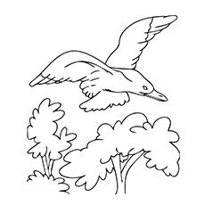 Seagull Drawing