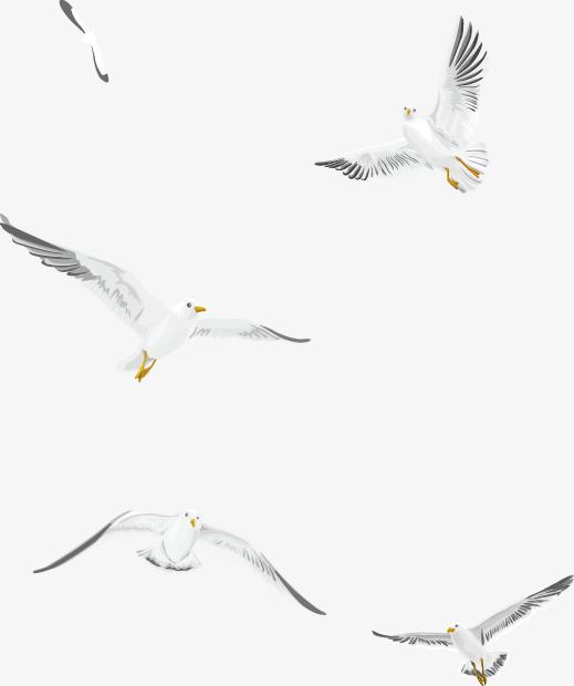 519x620 Flying White Seagull Vector Material, Flying Seagull, Vector