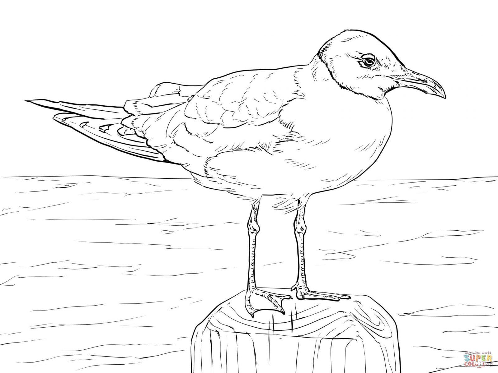 Seagulls Drawing
