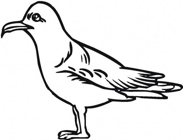 Seagulls Drawing at GetDrawings.com | Free for personal use Seagulls ...