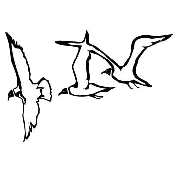 Seagulls Drawing