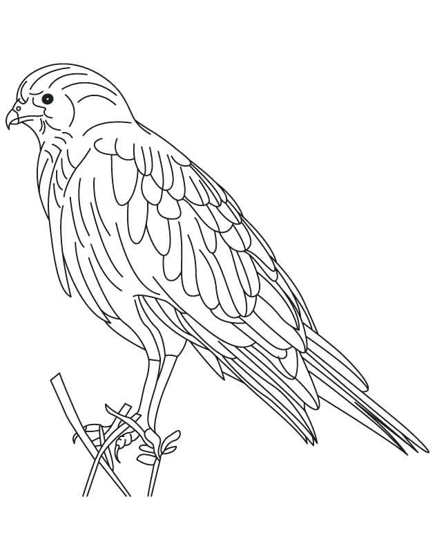 630x810 Hawk Coloring Pages Hawk Coloring Pages Free Joandco.co
