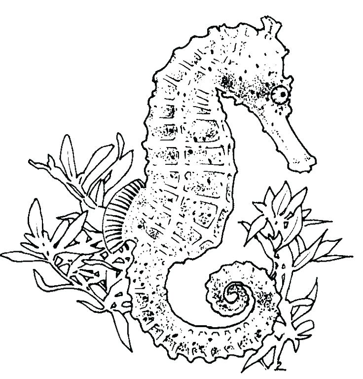 736x768 Eric Carle Coloring Pages Grouchy Ladybug Mermaid Seahorse