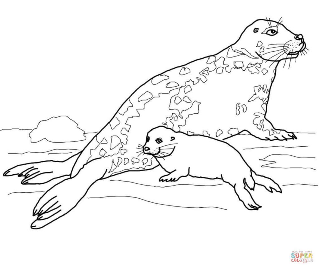 1024x864 Gray Seal Mother And Baby Coloring Page Free Download