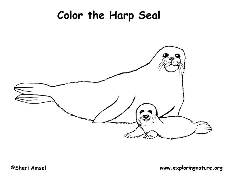 792x612 Seal (Harp) Coloring Page