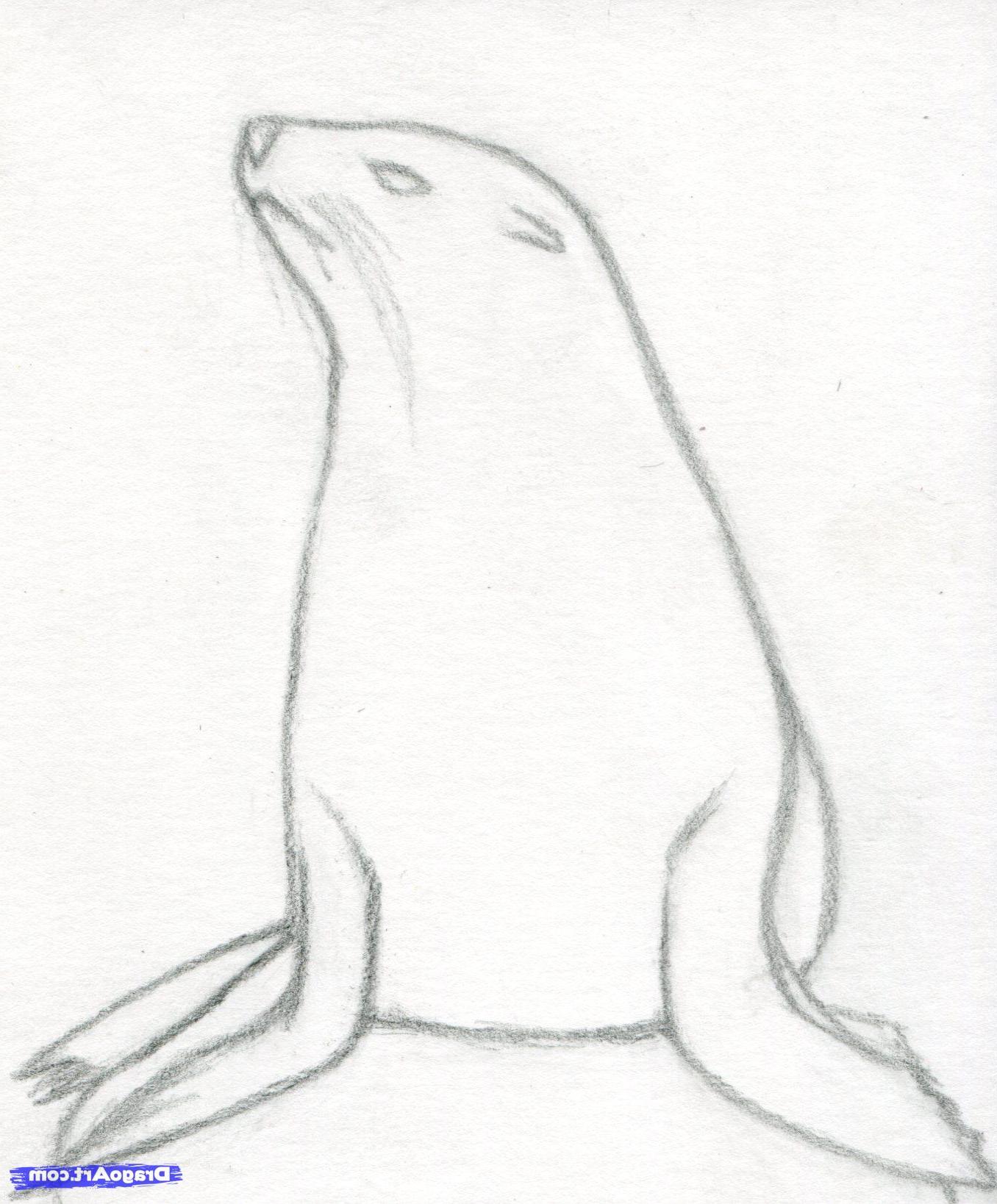 1356x1638 Easy Realistic Animals Drawing Drawn Seal Aquatic Animal