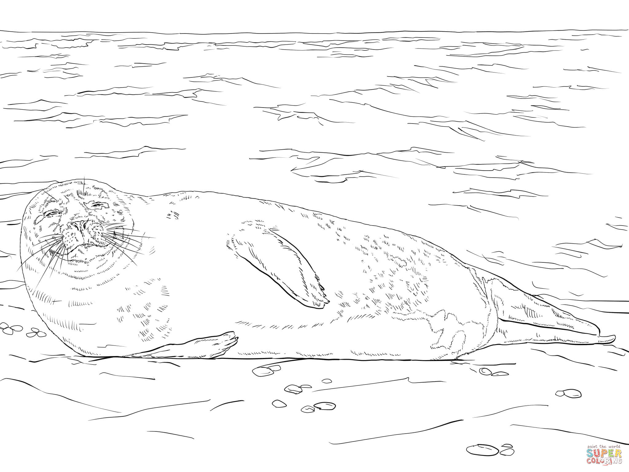 seal drawing step by step at getdrawings com