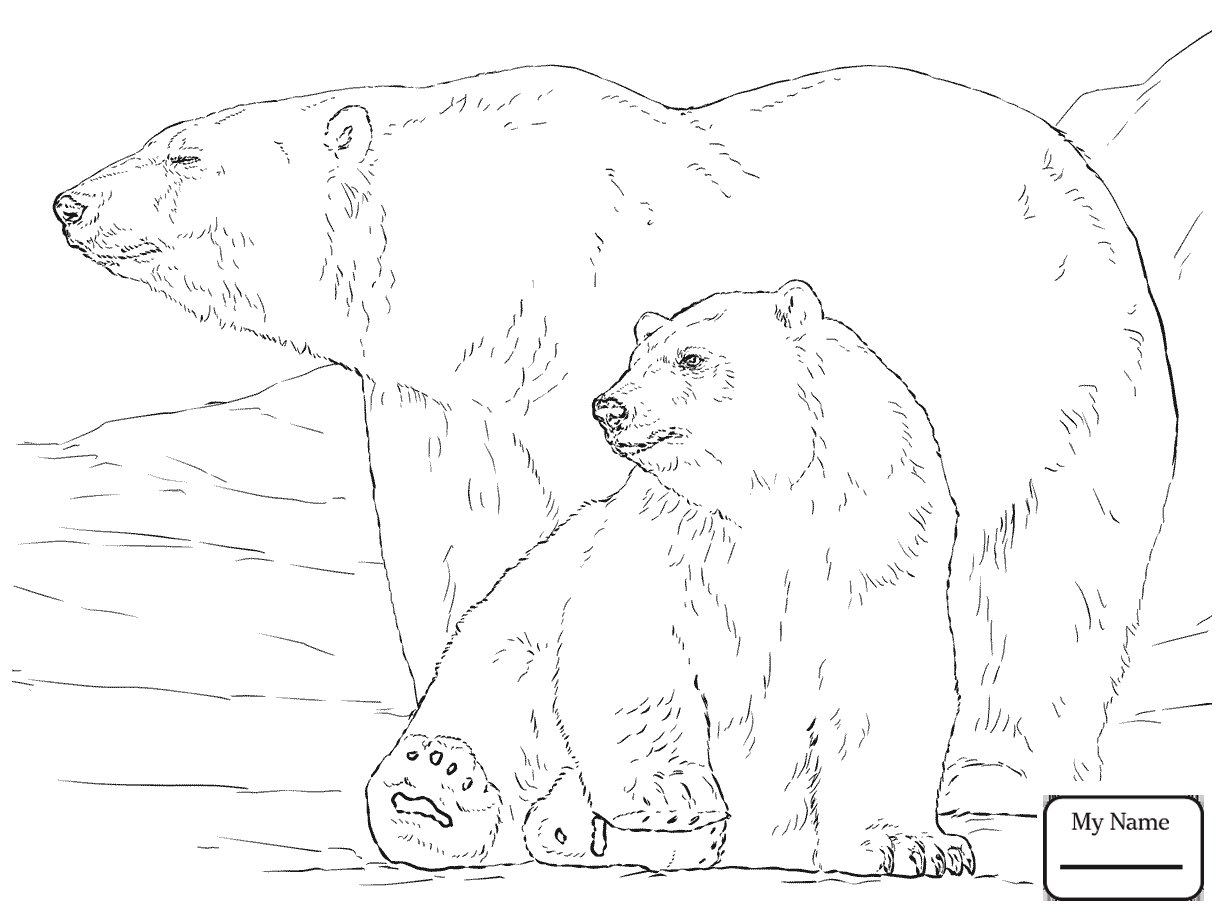 1224x918 Mammals Polar Bears Polar Bear Hunting For Ringed Seals Polar