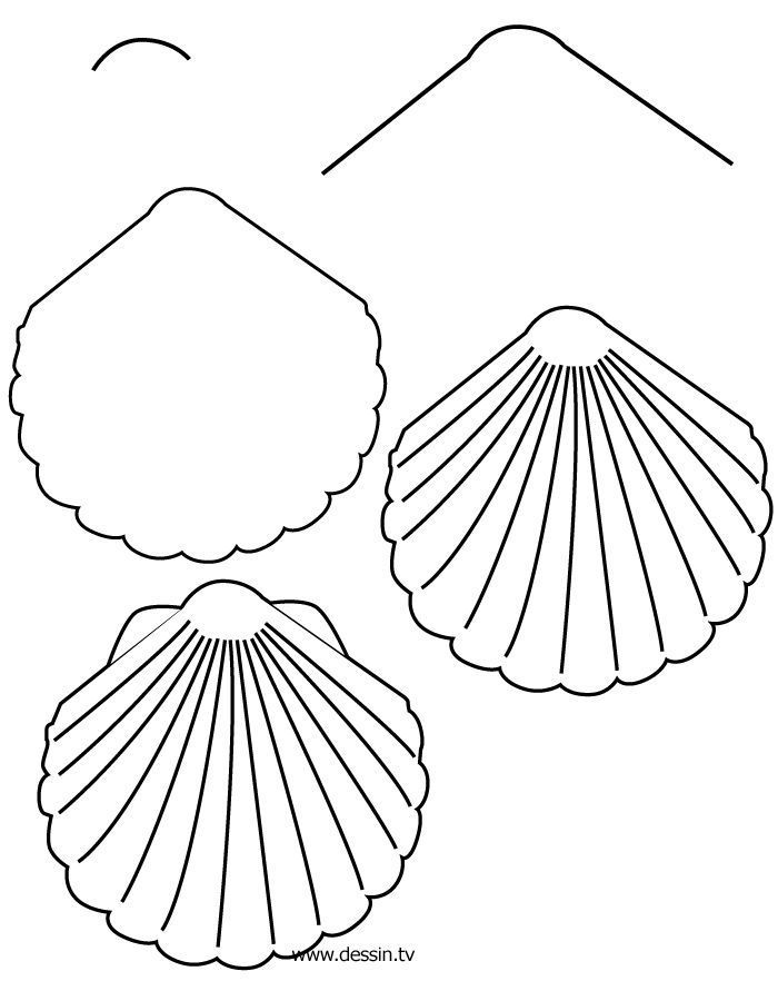 700x900 Drawn Shell Line Drawing