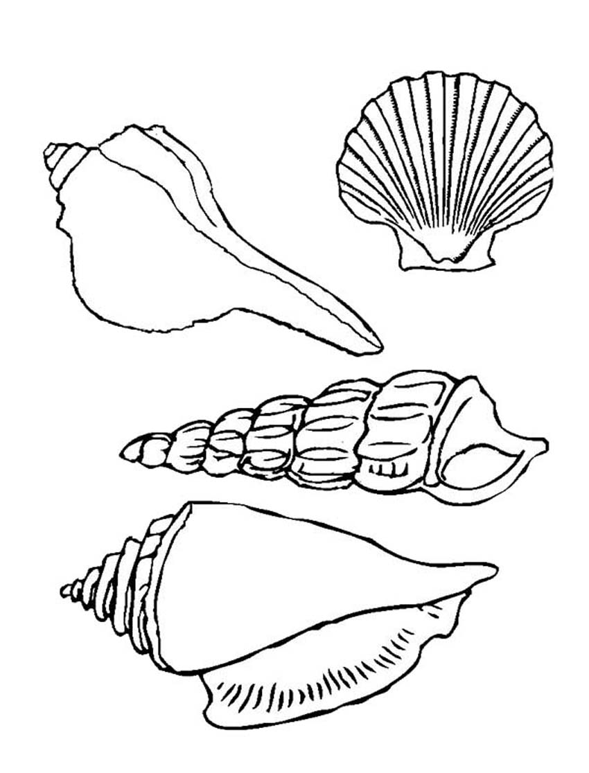 850x1116 Printable Seashell Coloring Pages Coloring Me