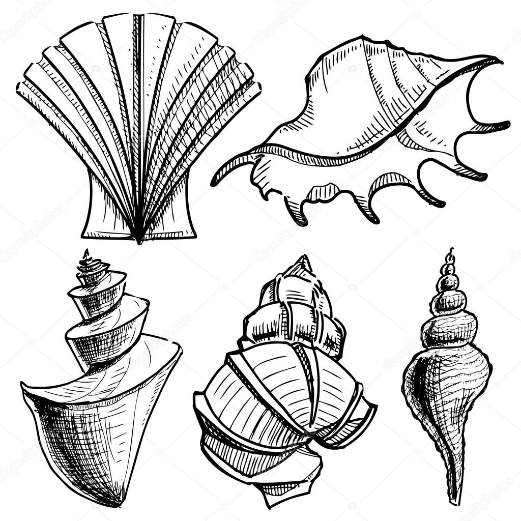 1024x1024 Sea Shells Collection. Hand Drawing Sketch Vector Illustration
