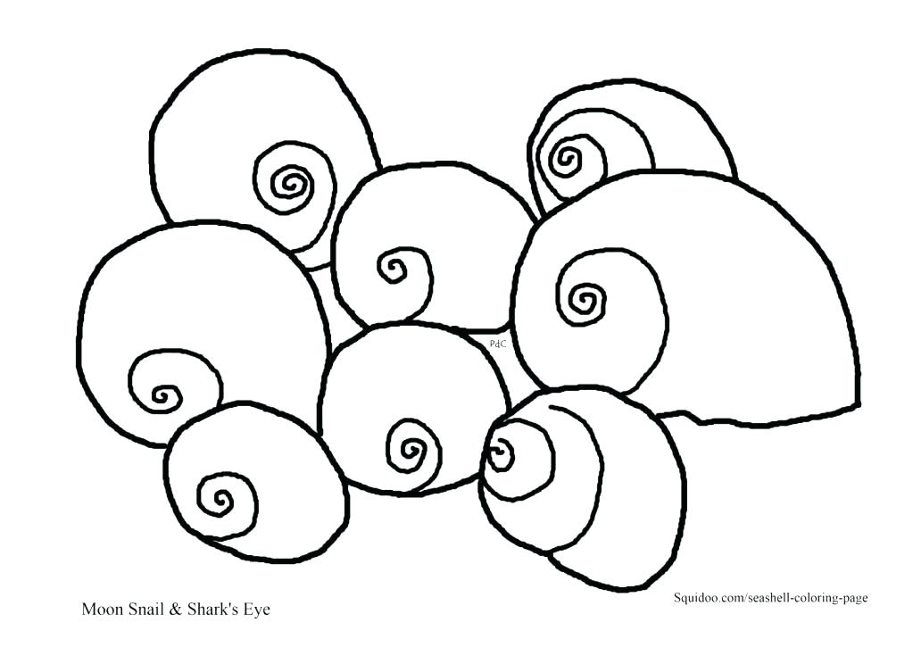 1023x744 Seashell Coloring Page Decorative Sea Shell Outline Drawing