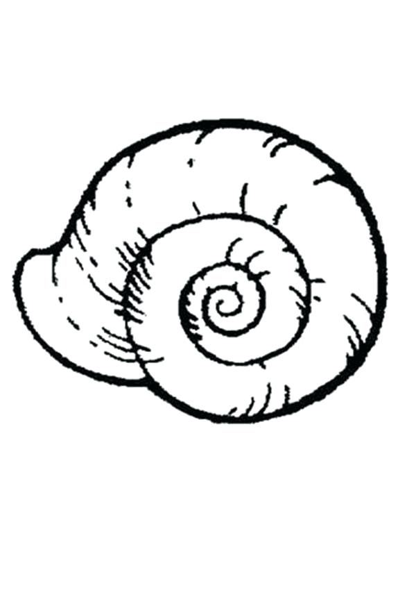 600x850 This Is Seashell Coloring Pages Images An Extinct Seashell