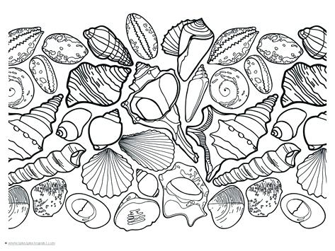 473x355 Sea Shell Coloring Page Omnitutor.co