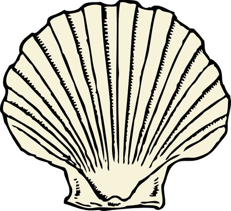 474x433 Seashell Drawing Lovely Zigzag Scallop Seashell Drawing Coloring