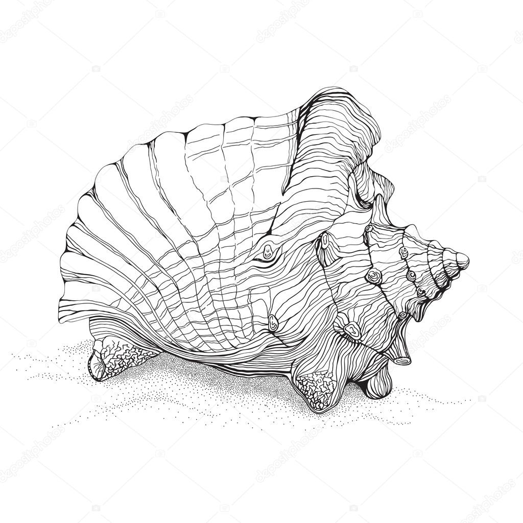 1024x1024 Decorative Seashell Drawing Stock Vector Catchat