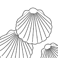 200x200 Drawing Shell
