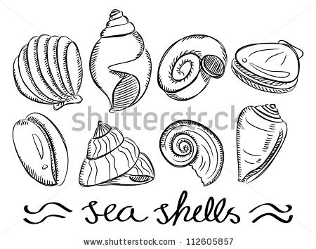 450x354 Drawn Sea Life Shell