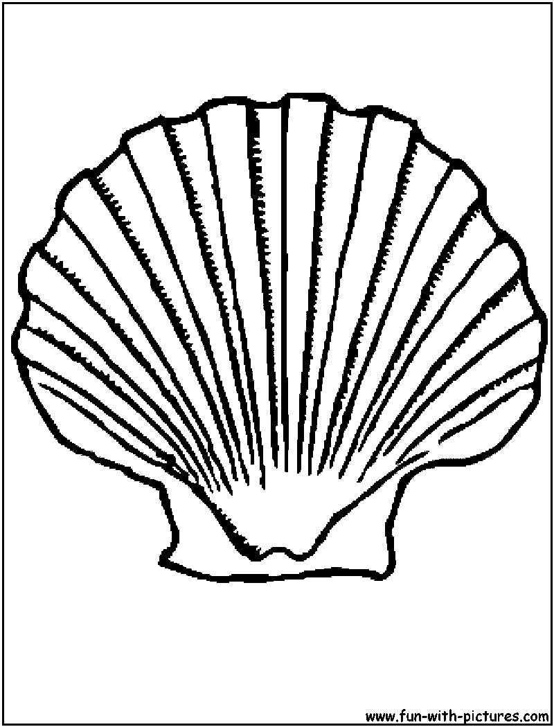 800x1050 Drawn Shell Colouring Page