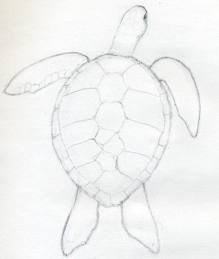 736x869 Drawn Shell Line Drawing
