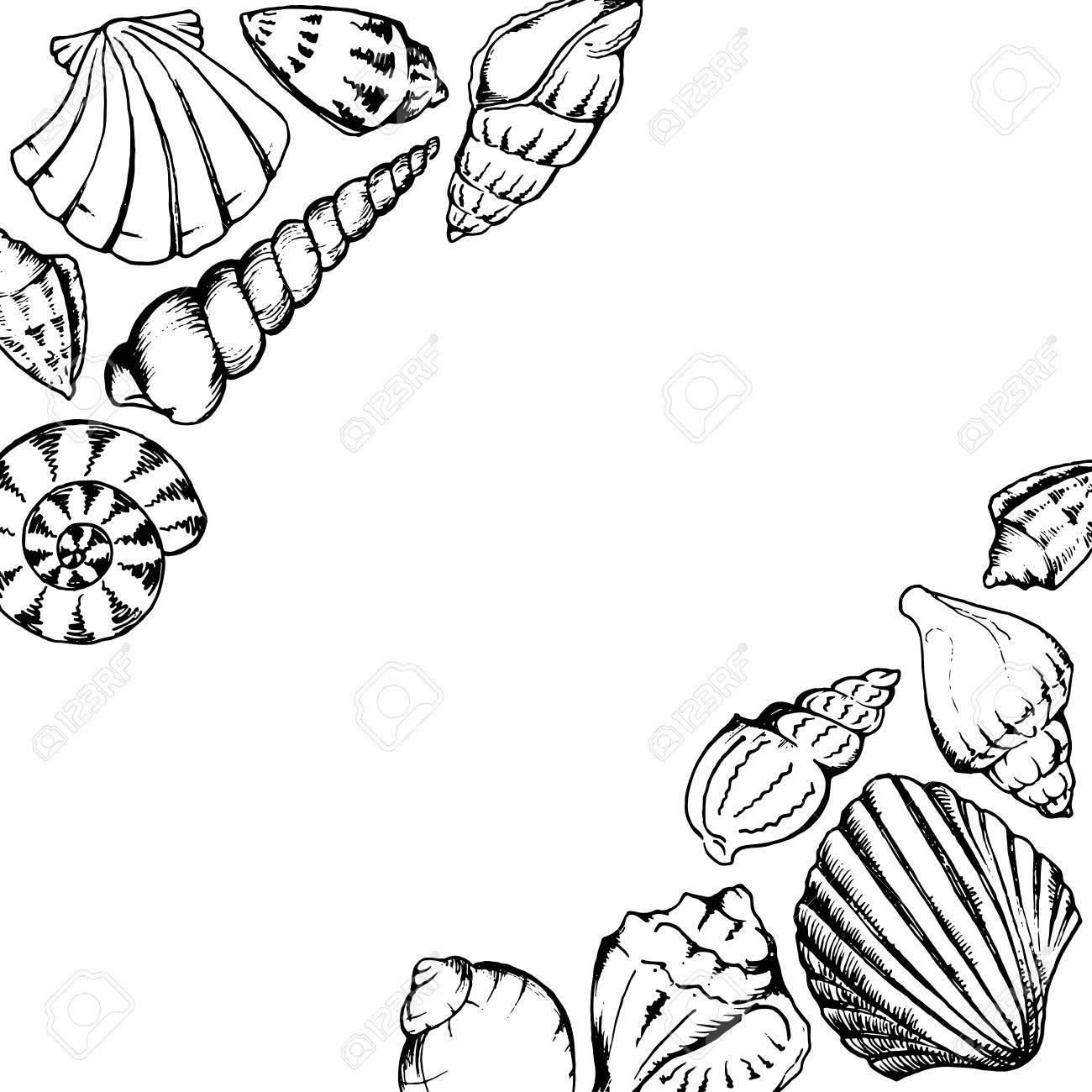 1300x1300 Monochrome Sea Shells Line Art Hand Drawn Frame Vector Isolated