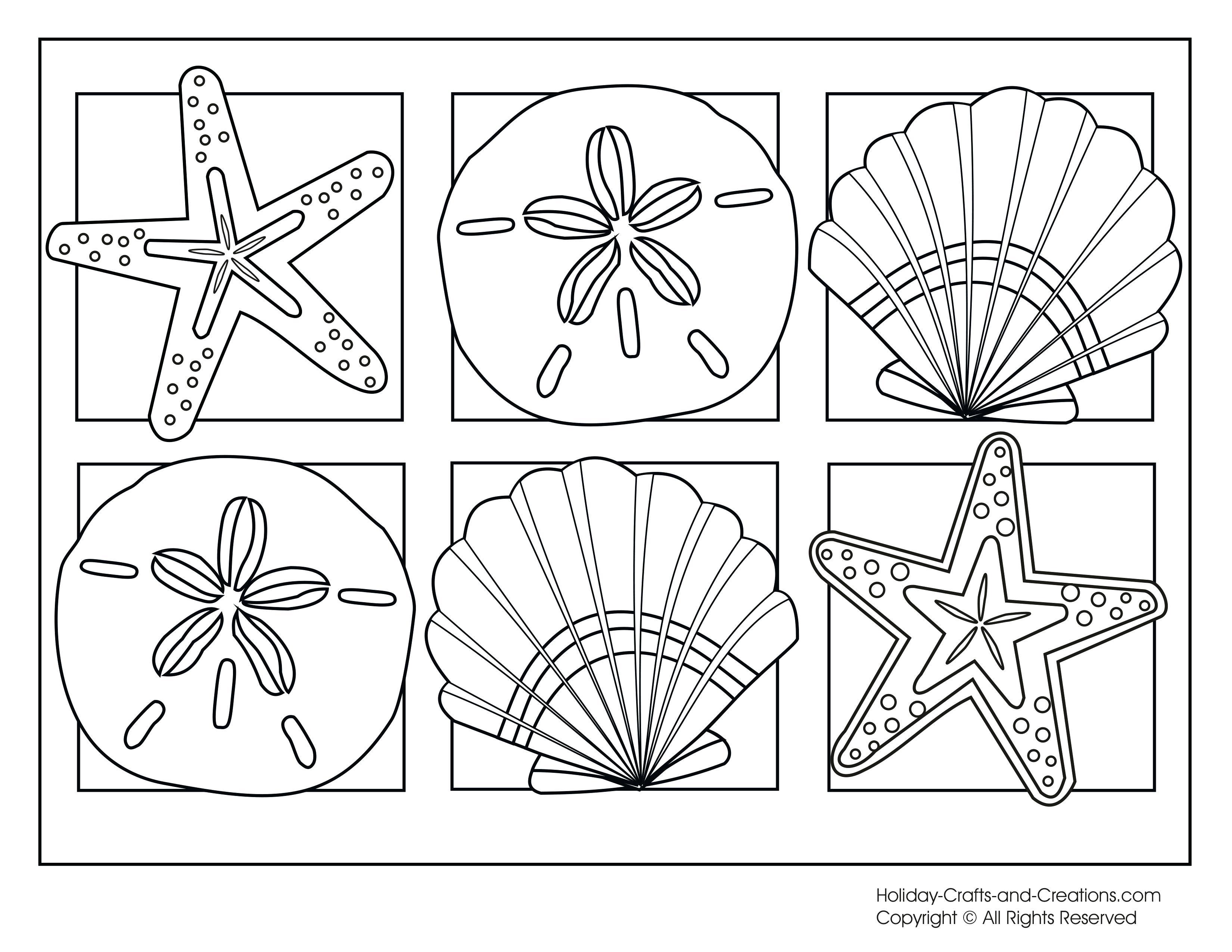 3300x2550 Pin Shell Line Drawing 5 Free Printable Seashells Coloring Pages