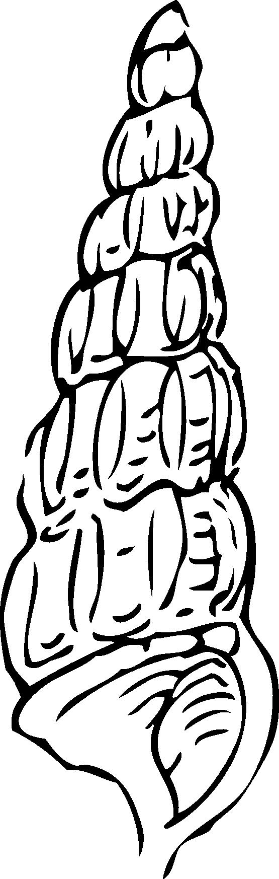 555x1746 Seashell Clipart Black And White Clipart Panda