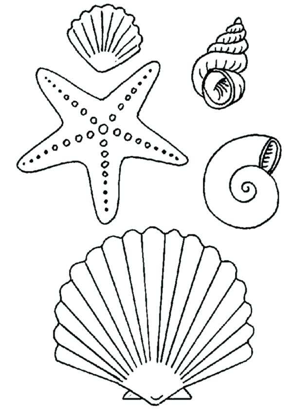 600x861 Seashell Coloring Page Fire Safety Coloring Pages Seashell Page