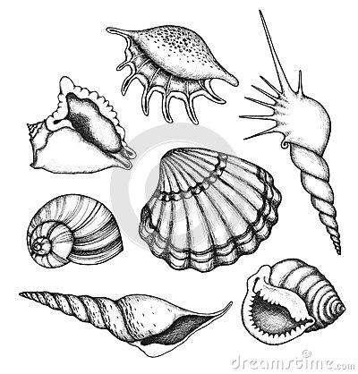400x418 Seashell Line Drawing