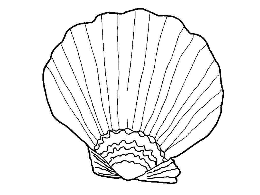 1024x768 Strong Seashell Coloring Pages A Lovely Zigzag Scallop Drawing