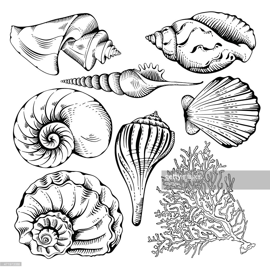 1024x1024 Drawn Coral Seashell Many Interesting Cliparts