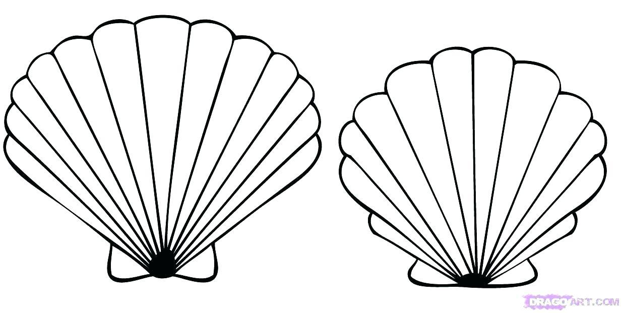 seashell pencil drawing 25